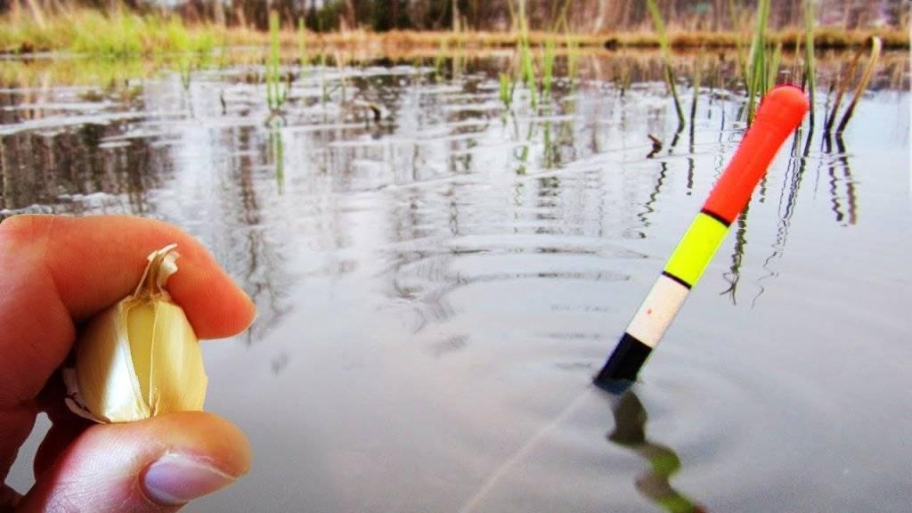 Как поймать карася разными методами и выбрать правильную стратегию ловли