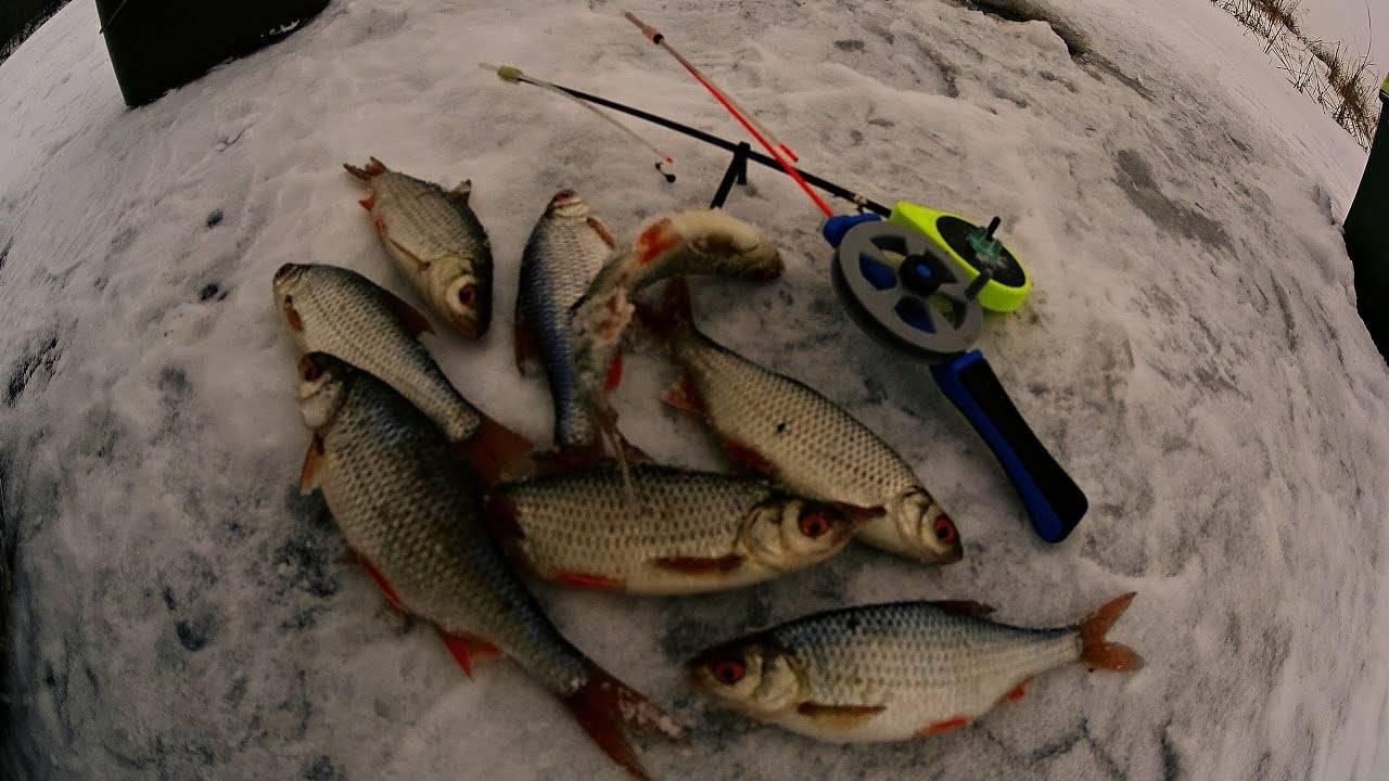 Плотва в феврале: снасти, насадки, особенности ловли