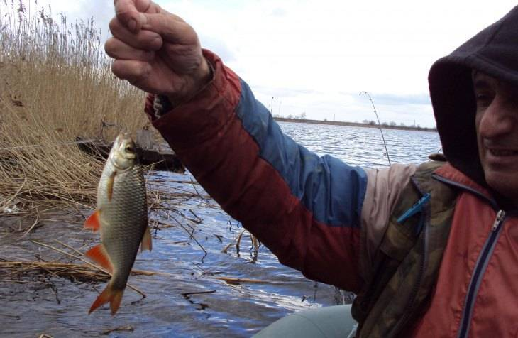 Ловля красноперки весной на поплавочную удочку и спиннинг