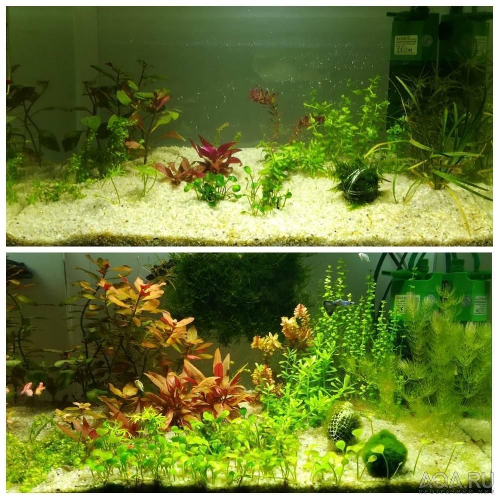 Методы выращивания аквариумных растений | аквариумные рыбки