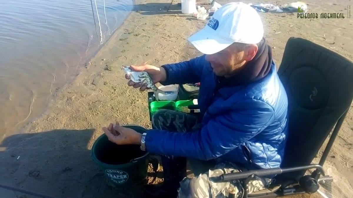 Ловля леща осенью на фидер, донку и поплавочную удочку в сентябре, октябре и ноябре