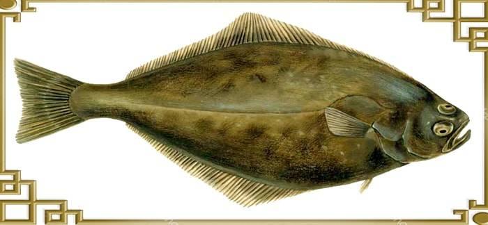 Палтус: виды рыбы, отличия и особенности образа жизни