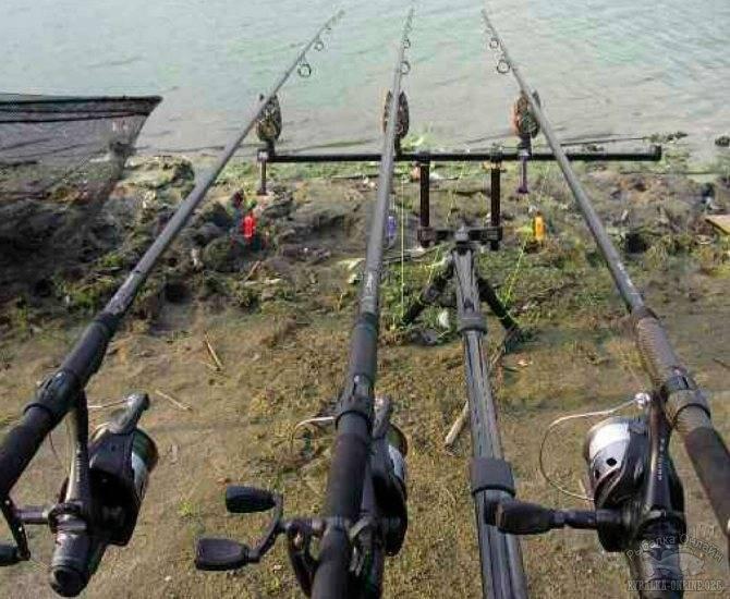 Рыбалка на карпа в августе и ее особенности - на рыбалке!