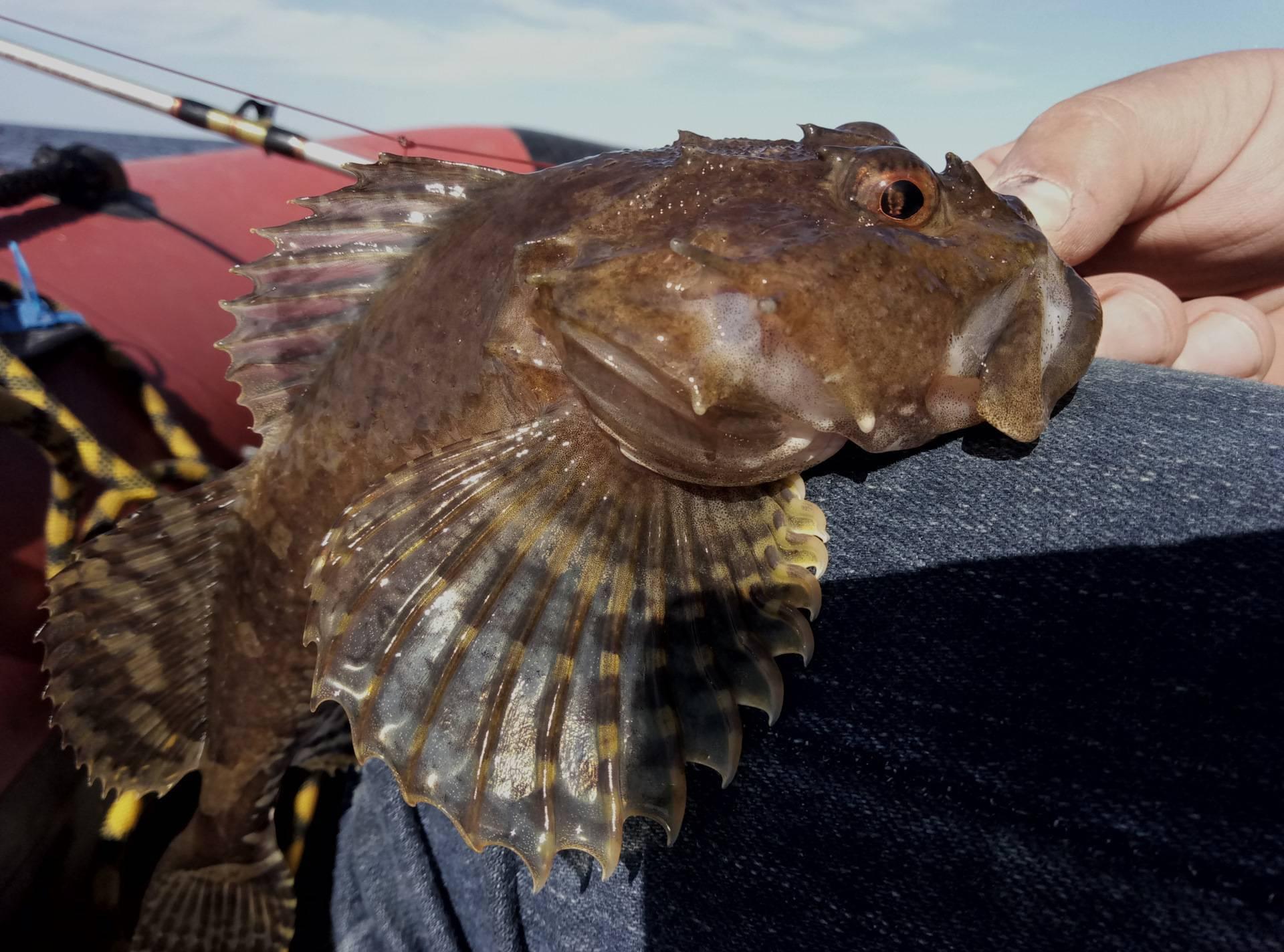 Бычок — реликтовая рыба