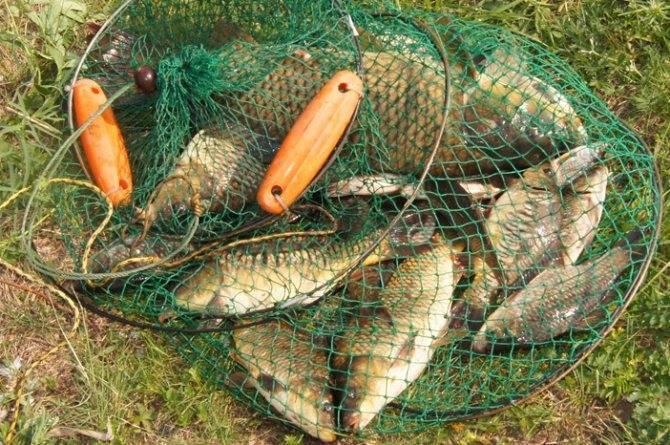 Карта Рыболовных Мест Курганской Области   Описание и Фото