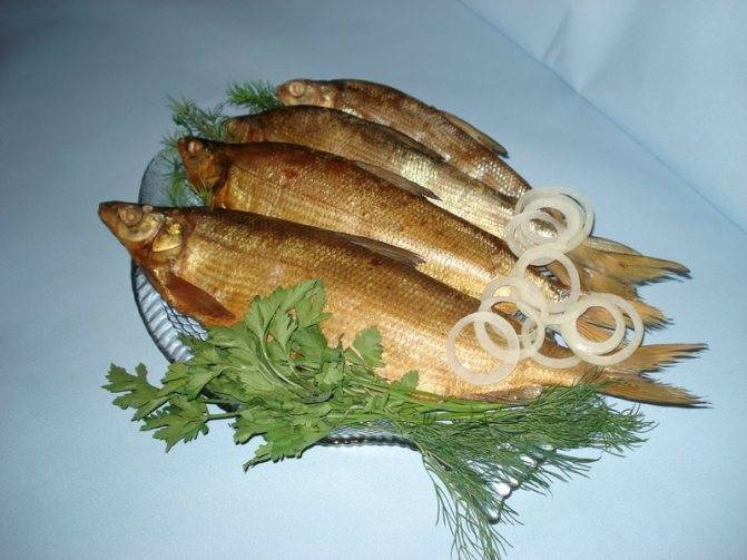 Рыба тугун или тугунок — среда обитания, описание, вылов и приготовление