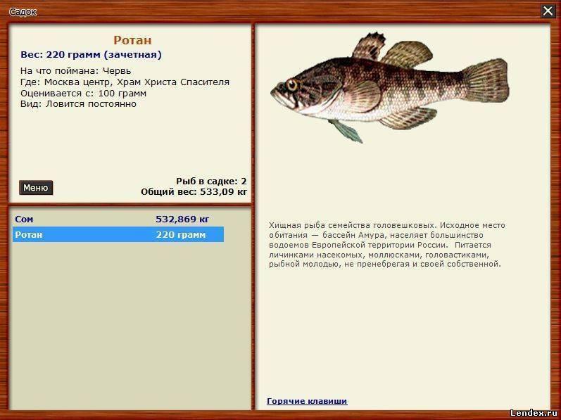 Особенности морды для ловли рыбы