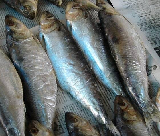 Почему селедка называется залом - про рыбалку