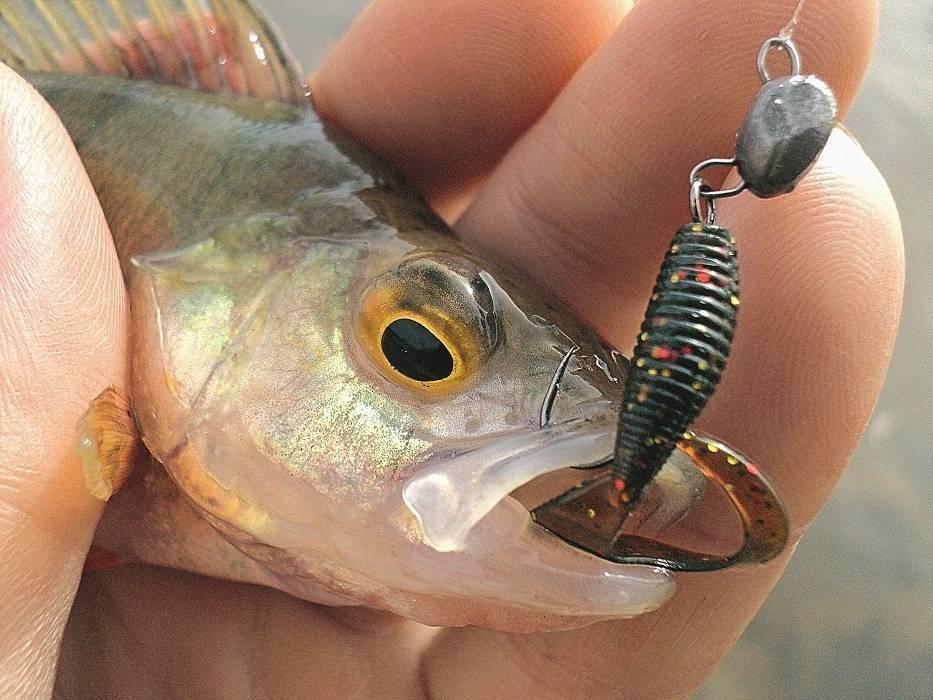 Как ловить на джиг судака, щуку и окуня правильно - на какой джиг лучше ловить