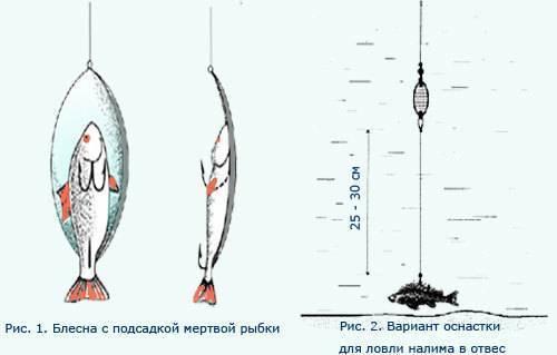 Ловля налима зимой на стукалку и 3 способа сделать приманку ловля налима зимой на стукалку и 3 способа сделать приманку