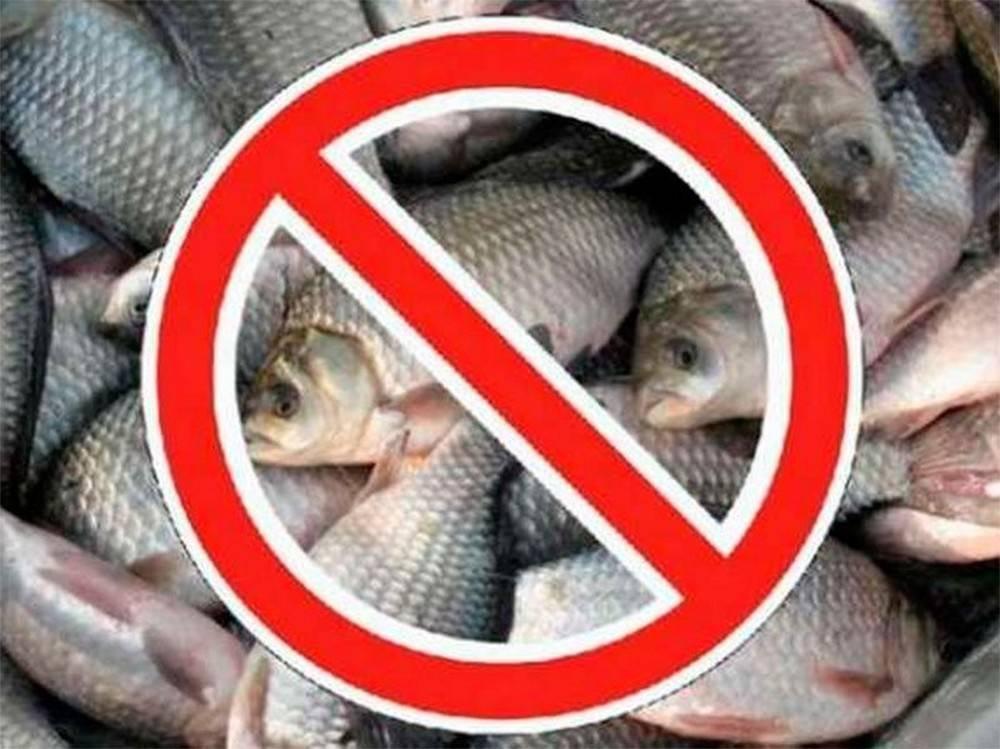 Все статьи о рыбалке в новосибирске и нсо