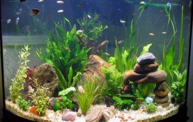 Вода для аквариума и её подготовка: как быстро приготовить