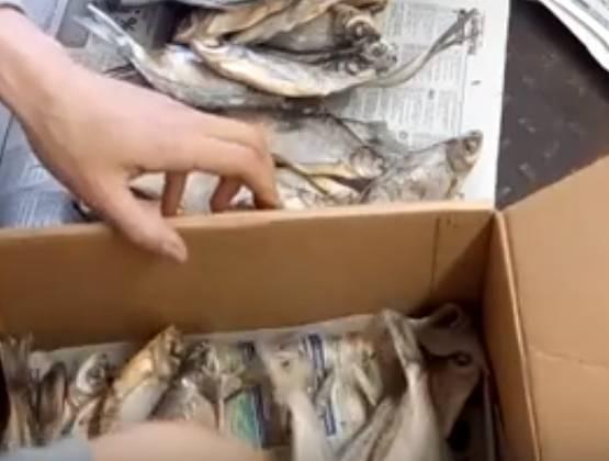 Как хранить сушеную рыбу в домашних условиях (таранку и другие)