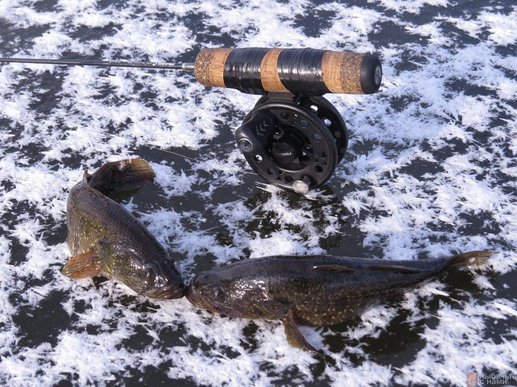 Рыба ратан: как ловить ротана зимой, снасти и прикормки для зимней ловли