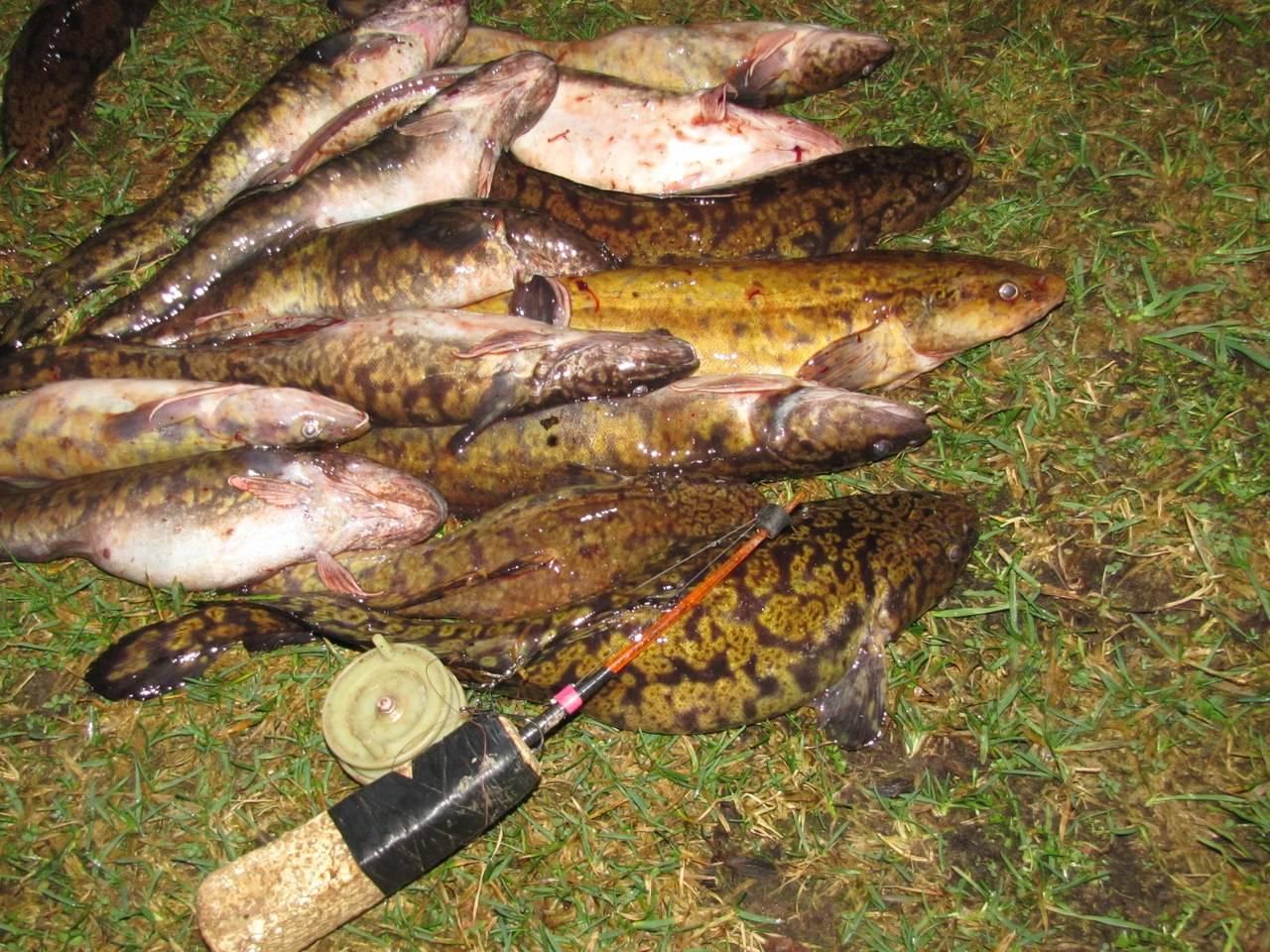 Секреты и особенности ловли налима на оке – рыбалке.нет