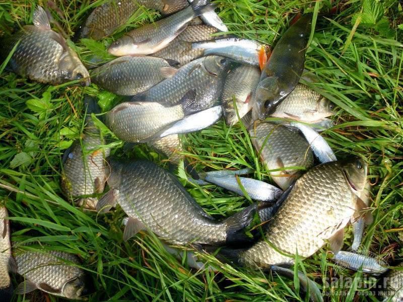 Ловля рыбы в беларуси: какие виды обитают, рыбалка зимой, лучшие места и водоёмы для ловли рыбы