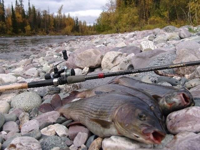 Зимняя рыбалка в коми: правила ловли, отчеты и отзывы