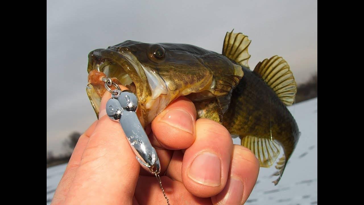 Как ловить ротана зимой: где ловить, на что клюет, советы от рыбаков