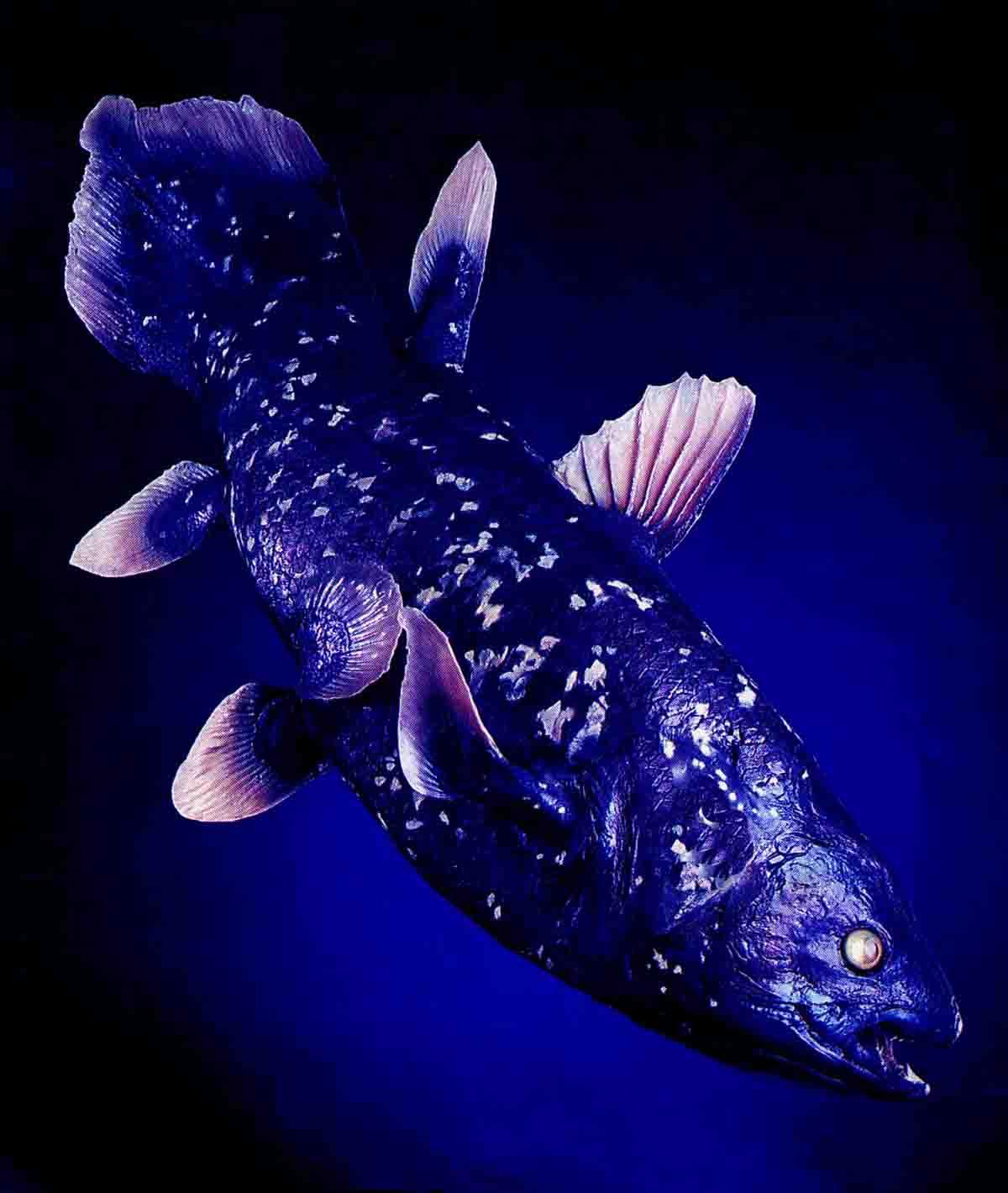 Рыба химера: морская крыса, кролик или королевская рыба?