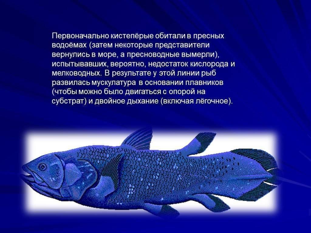 Интересные факты о рыбах для детей: самые необычные особи, умения и размеры, рекордные сведения