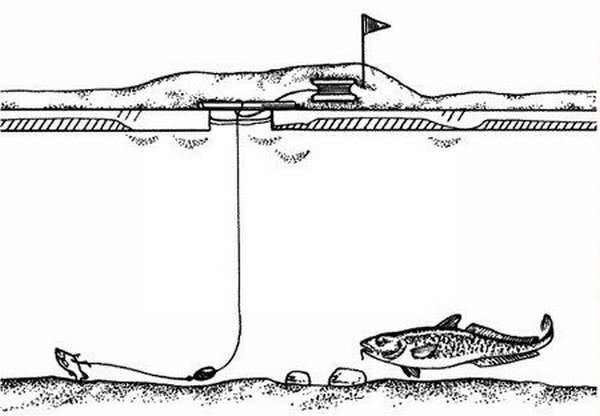 Ловля налима зимой на жерлицы: особенности рыбалки в феврале, используемые оснастки