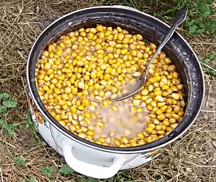 Консервированная кукуруза для рыбалки какая лучше - про рыбалку