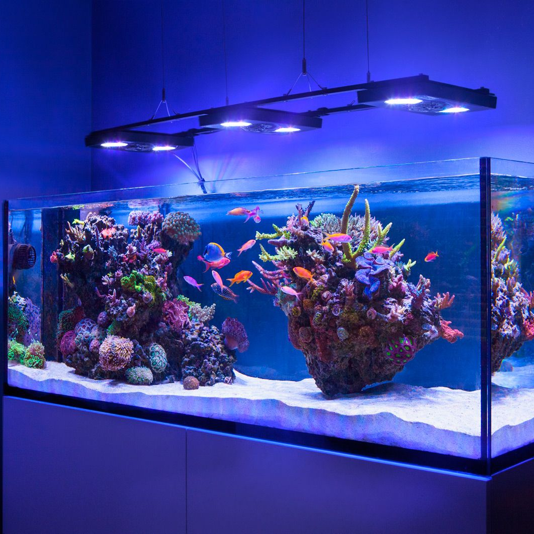 Морской аквариум дома: с чего начать, оборудование, как сделать, фото