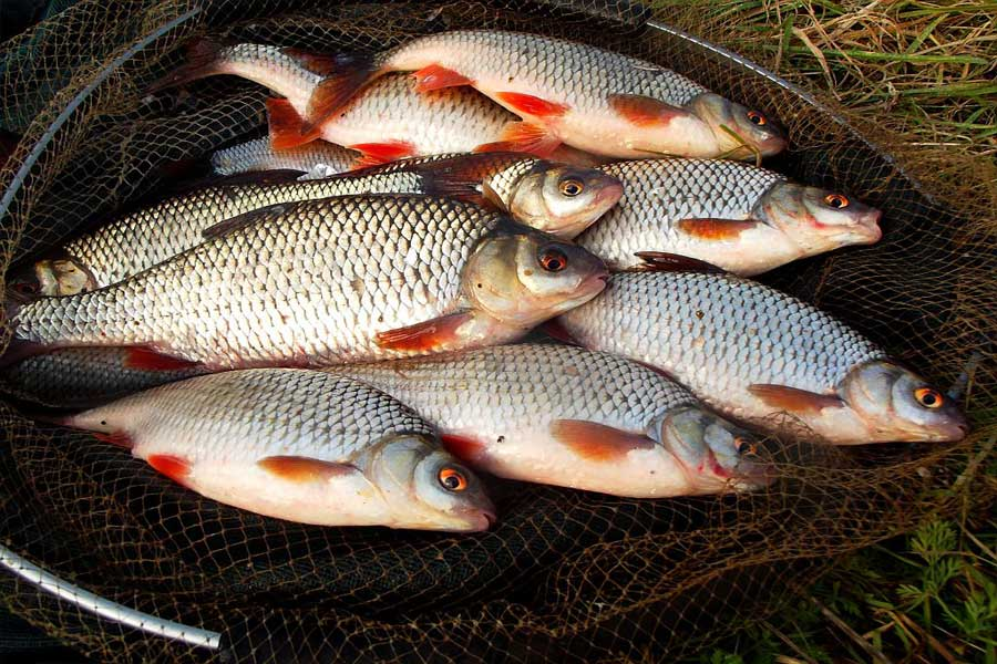 Рыбалка на финском заливе