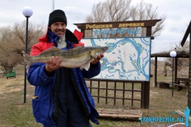 Ловля хищника на поролоновые приманки на течении - рыбалка на ахтубе с комфортом - база трёхречье