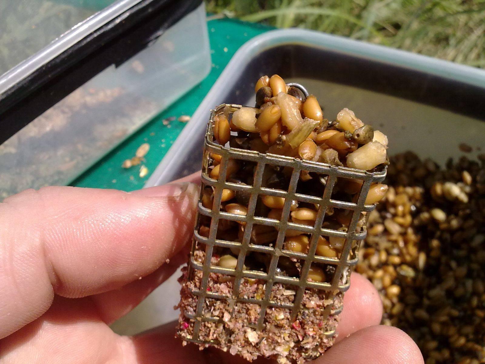 Как запарить пшеницу для рыбалки
