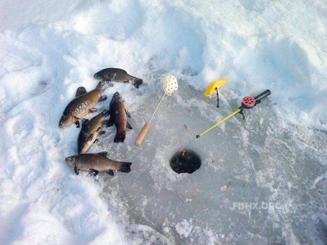 Ловля сазана зимой: какую снасть и прикормку использовать?