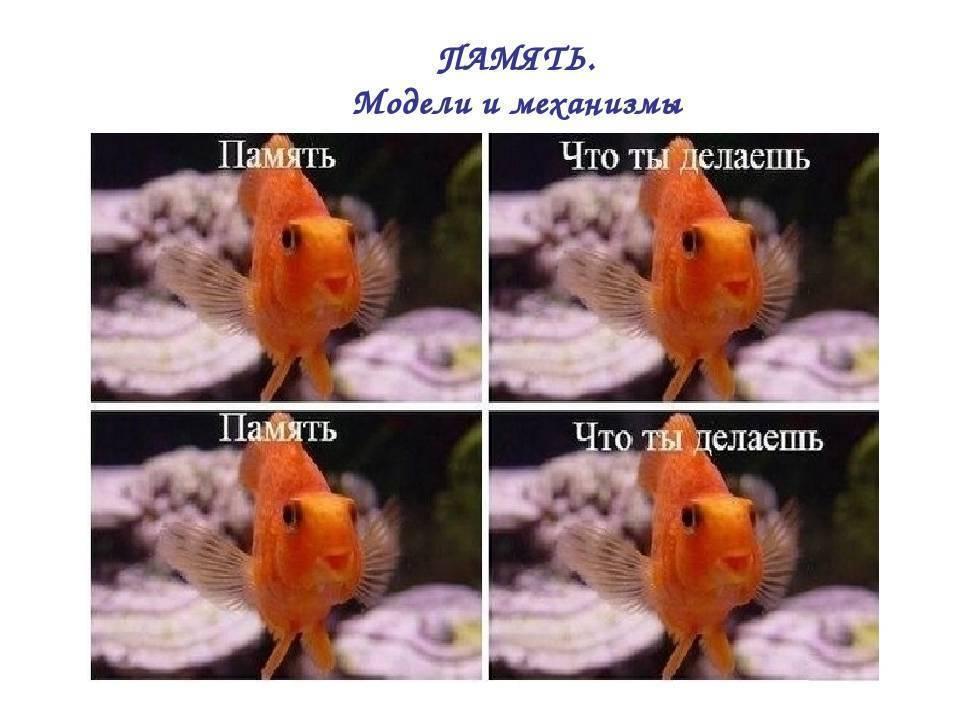 Память у рыбы сколько - рыболов