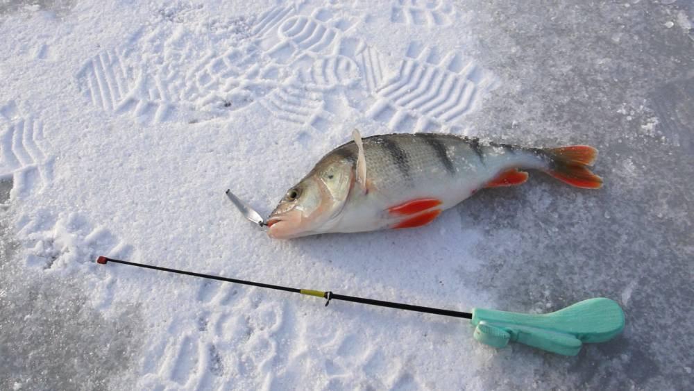 Ловля окуня зимой на озере