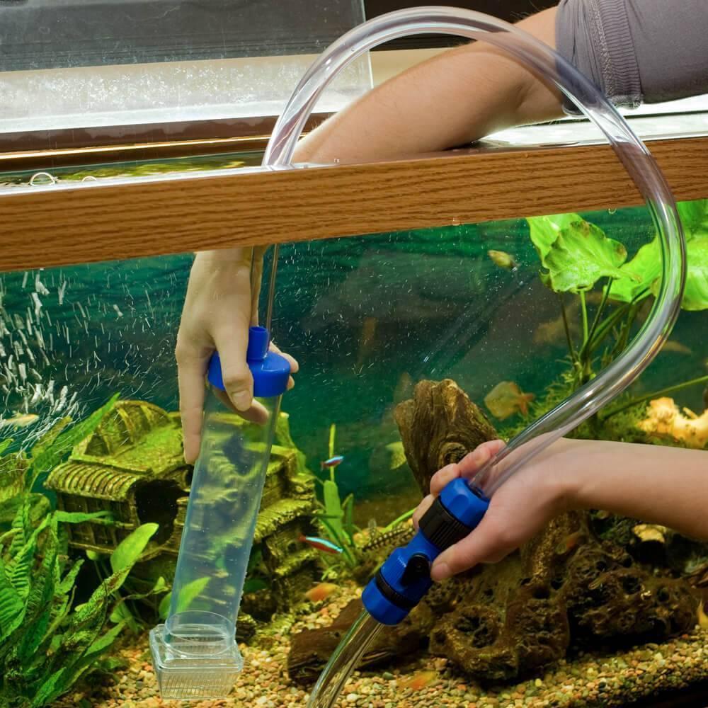 Чистка и дезинфекция аквариума изнутри и снаружи, куда девать рыбок