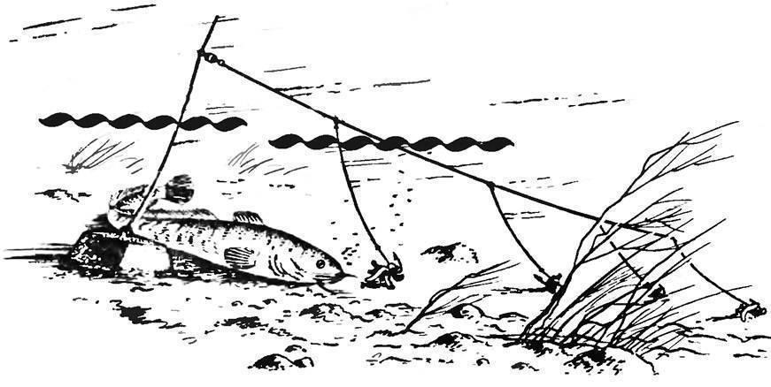 Закидушки для ловли налима