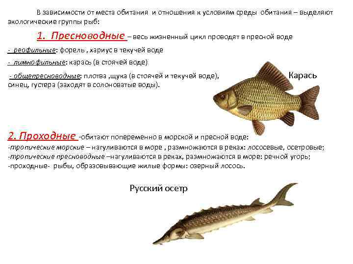 Чем полезна речная рыба карась. почему лучше не есть карася?   здоровье человека