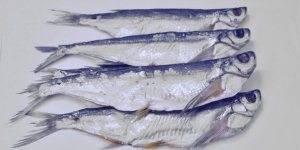 Как вкусно приготовить чехонь: рецепты в духовке, на сковороде, котлеты, вяленая рыбка - onwomen.ru