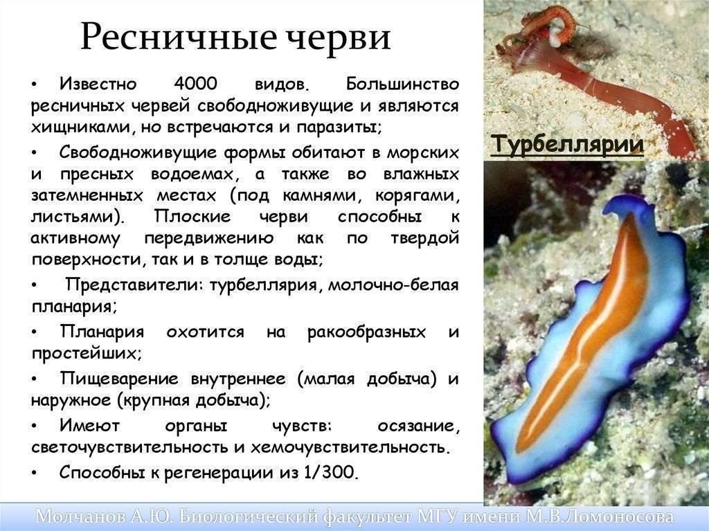 Нематоды в аквариуме или появление белых червячков
