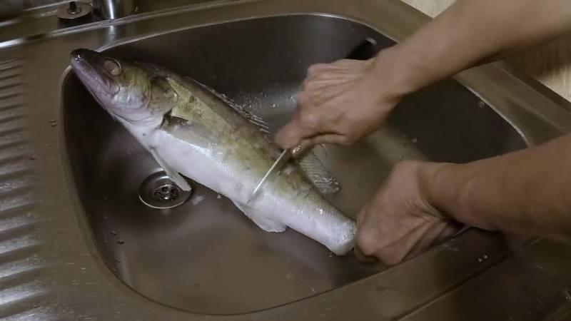 Как быстро почистить щуку от чешуи и костей: полезные советы и способы очистки рыбы