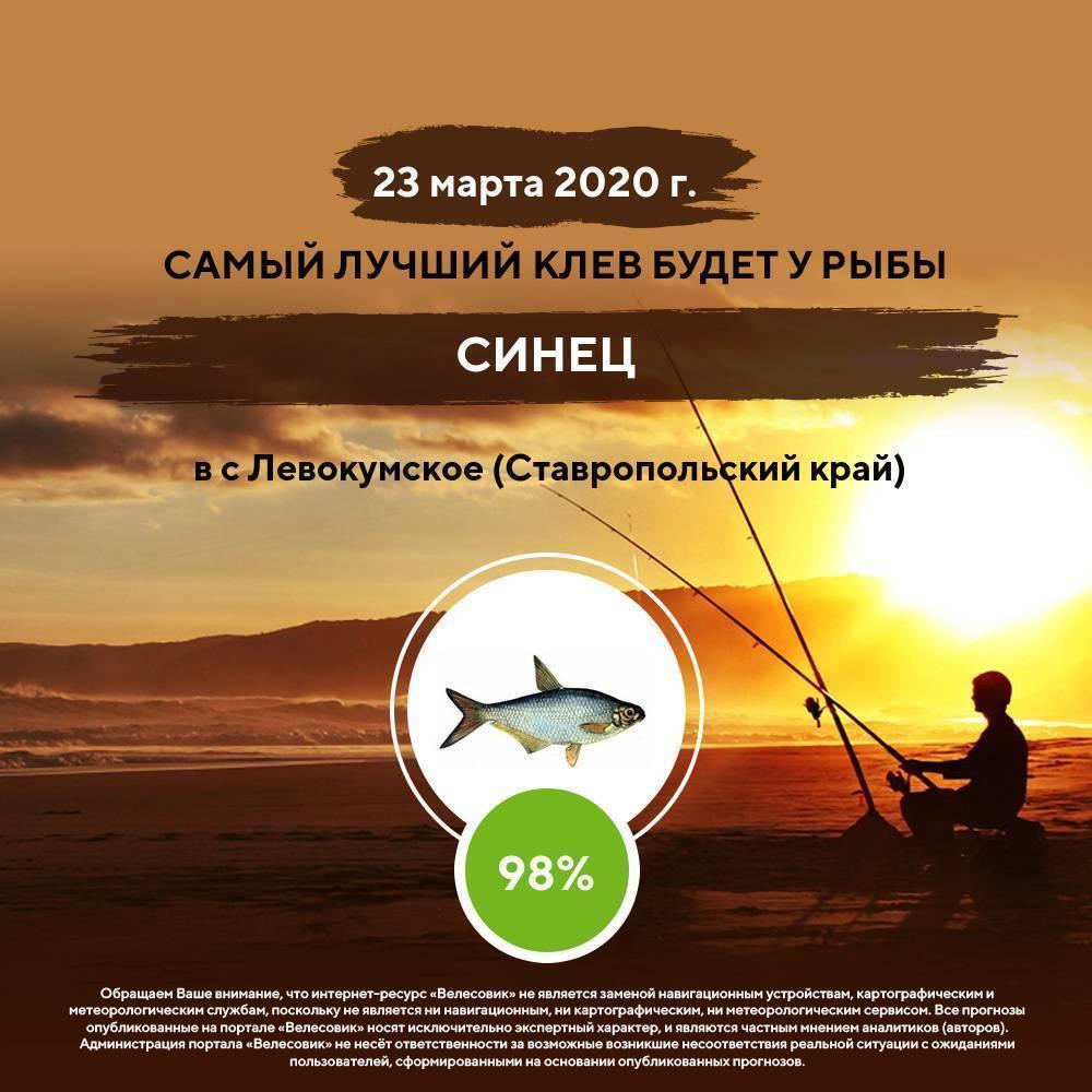 Пять самых рыбных мест россии  — выбирай.ру