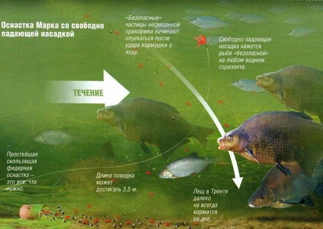 Ловля леща на фидер: как ловить леща на фидер - прикормка, насадки, выбор места и снасти для рыбалки на фидер
