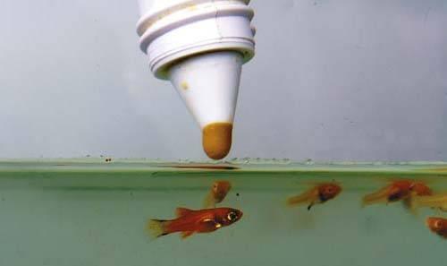 Корм для рыб артемия: подробный разбор