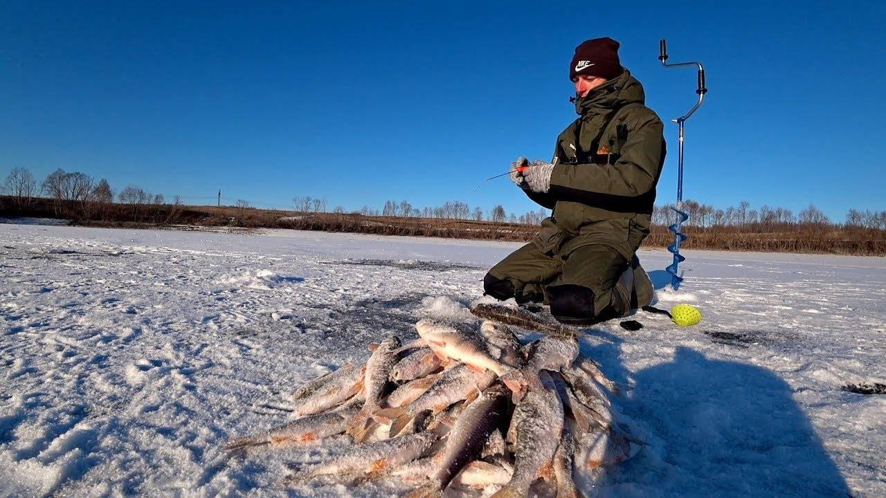 Окунь по первому льду, особенности ловли окуня по перволедью