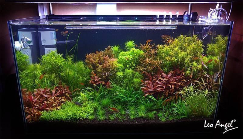 Текст лекции о выращивании аквариумных растений
