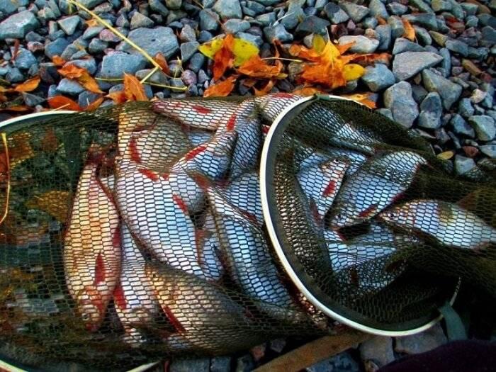 Ловля спиннингом на живца: оснащение удочки и способы рыбалки