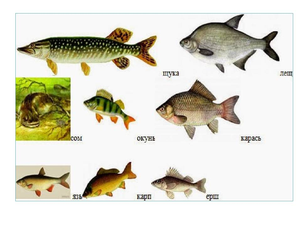 Рыбалка в начале июня на карпа, карася, язя, щуку, судака, окуня и сома. рыбалка в июне. рыболовный календарь