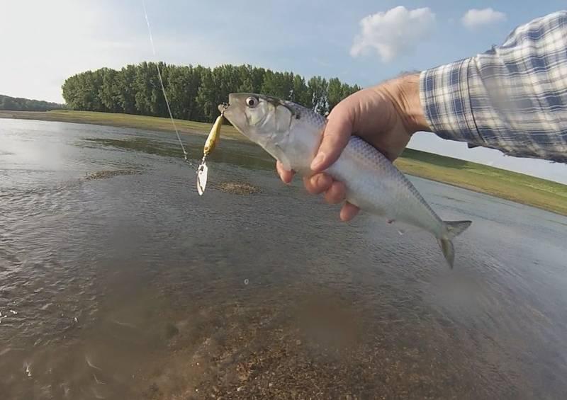 Современная поплавочная снасть для рыбалки на волге. часть ii