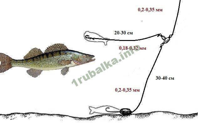 Особенности и тонкости ловли судака на живца