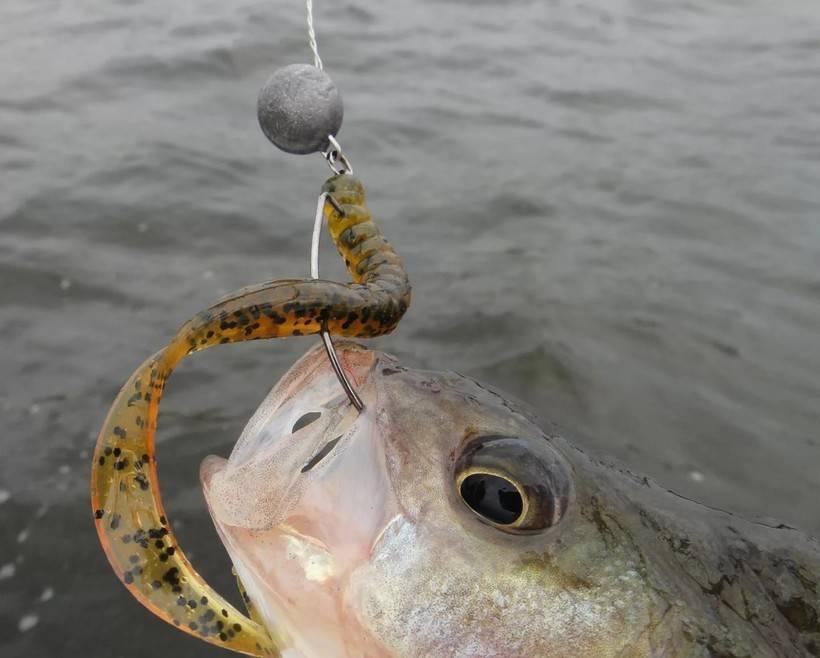 Кефаль: что за рыба, где водится, фото, описание, костлявая или нет