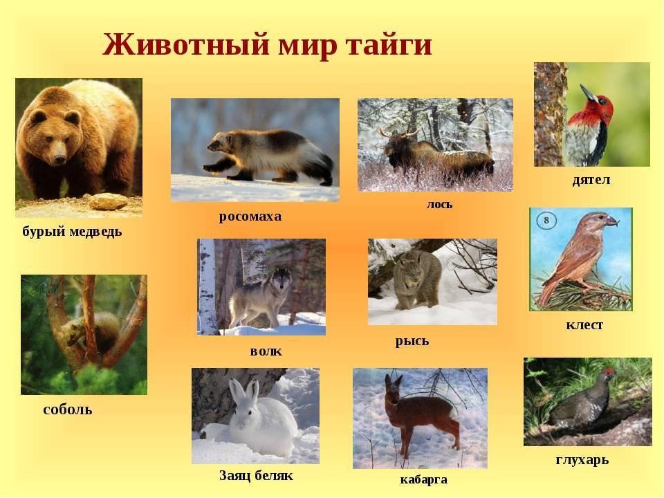 Животные тайги – уникальные создания природы, живущие в суровых условиях